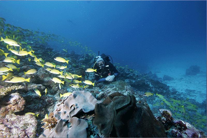 Diving-06WEB