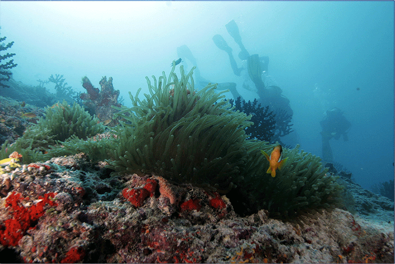 Diving-09WEB