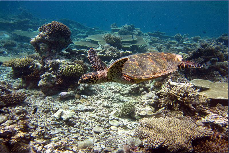 Diving-16WEB