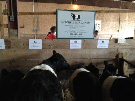 Mitchell Ledge Farm