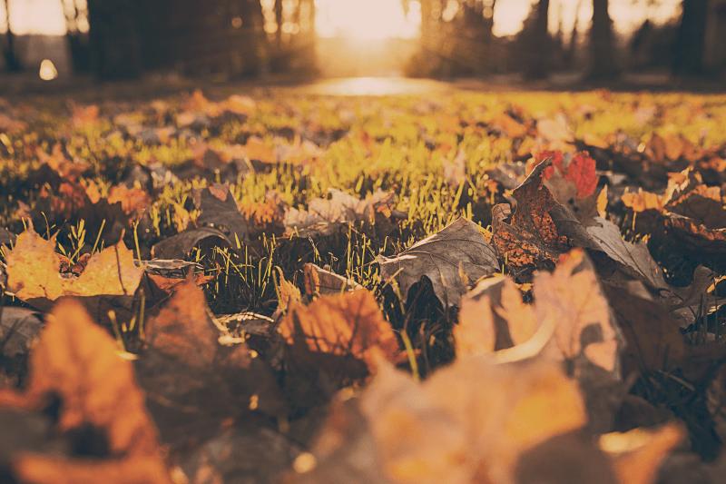 Fall Living