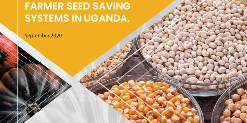 IMPLICATIONS OF SEED TRADE AND RELATED LAWS ON FARMER SEED SAVING SYSTEMS IN UGANDA