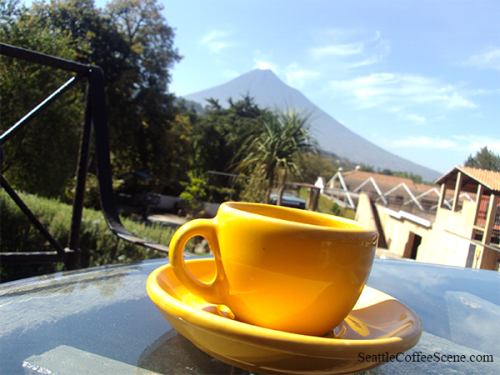 seattle coffee scene in Guatemala