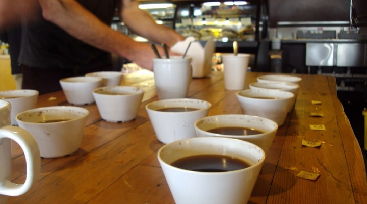 Latest Podcast: Cupping with Ballard Coffee Works