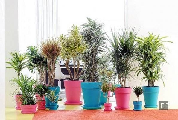 Комнатные растения для кухни фото и название — Сад и огород