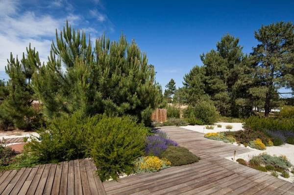 Хвойные деревья на дачном участке — Сад и огород