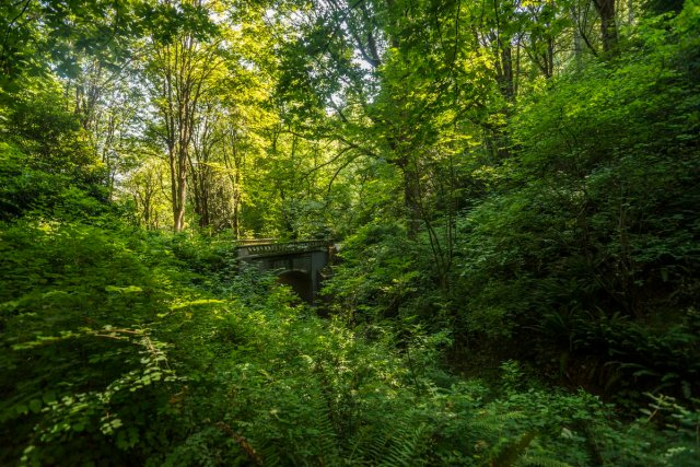 example of submission: photo of wooded ravine, heavily vegetated undergrowth and bridge in background.
