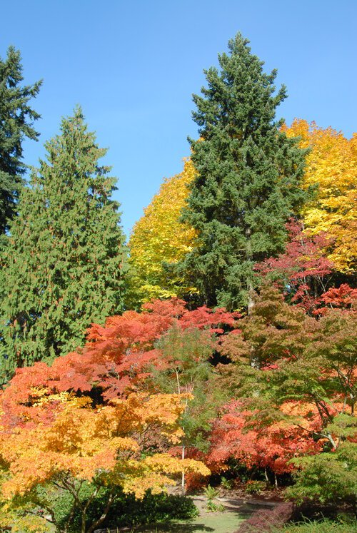 view of colorful fall and evergreen floiage