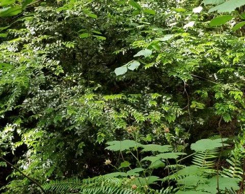 photo of vegetation