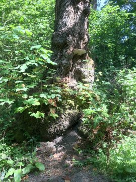 photo of tree trunk with fungus