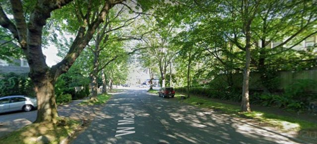 photo of tree-lined street