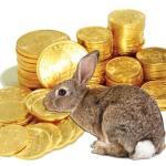 bellevue seo rabbit
