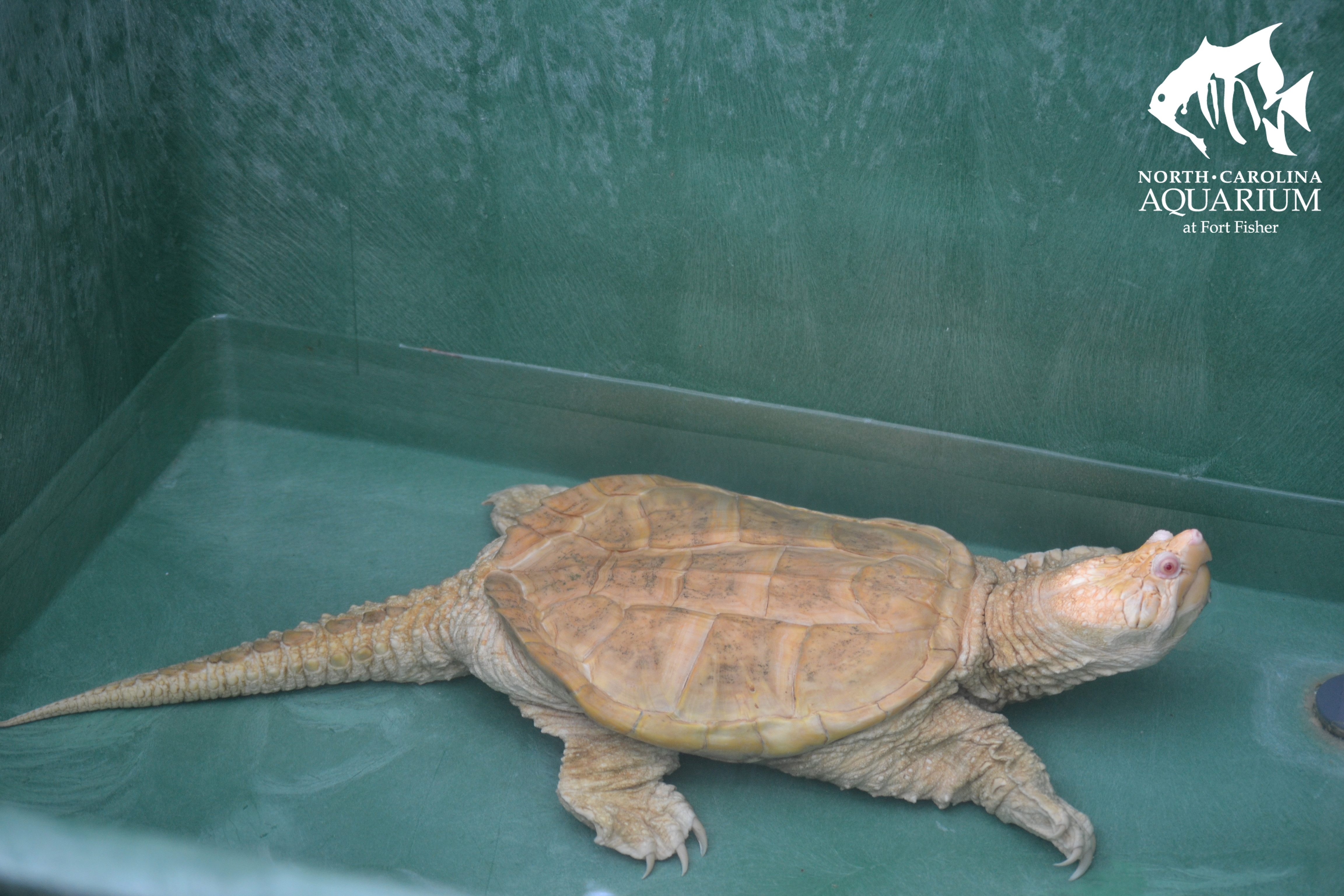 Weblessons Turtles Under Human Care