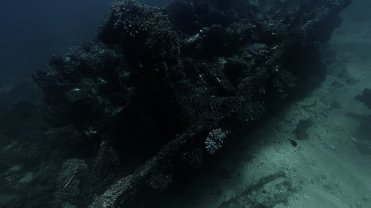 Clip 49: Wreck covered in corals with Band Dot Goatfish and Surgeon fish. Dive site: Schlemmerstad Wreck