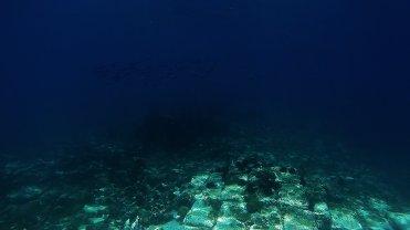 Clip 7: Squids from a distance. Dive site: Schlemmerstad Wreck