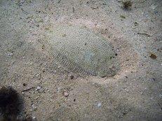 A Flounder in Dar es Salaam 1024 x 768