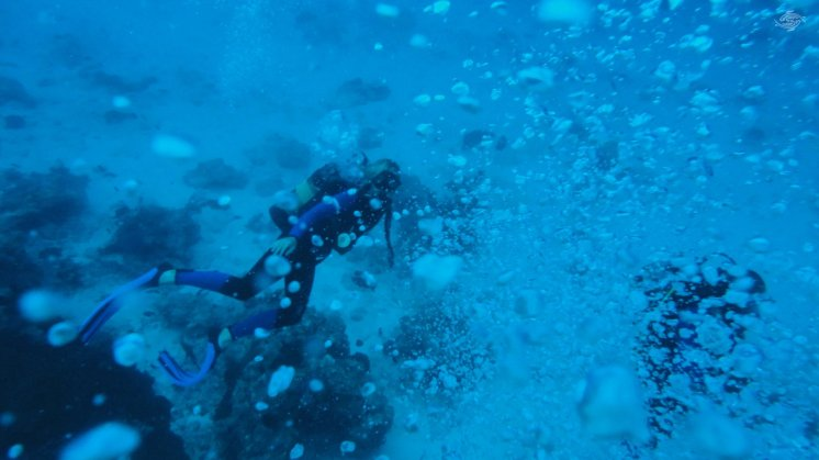 Scuba Diving in Zanzibar 1920 x 1080
