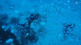Scuba Diving in Zanzibar 1366 x 768