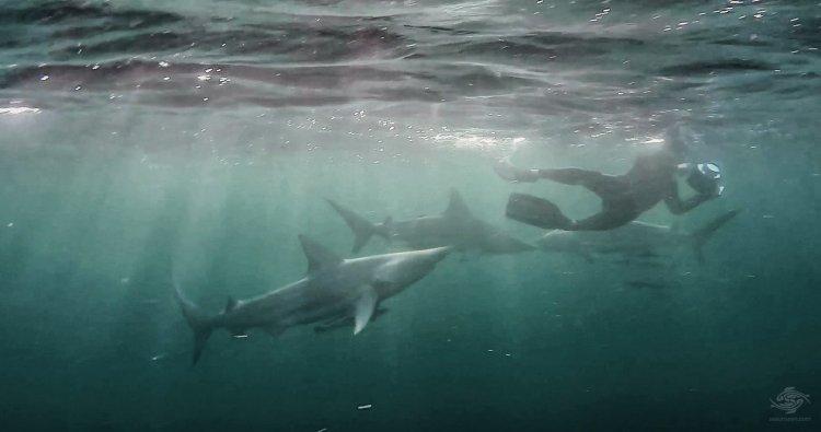Blacktip Sharks People