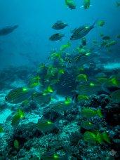 underwater photography tanzania