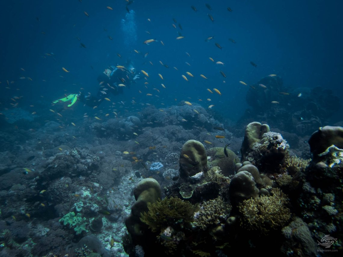 mafia island scuba diving