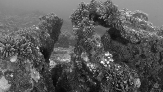 Hard and soft corals covering the wreck