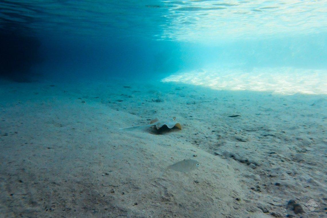 freediving australia