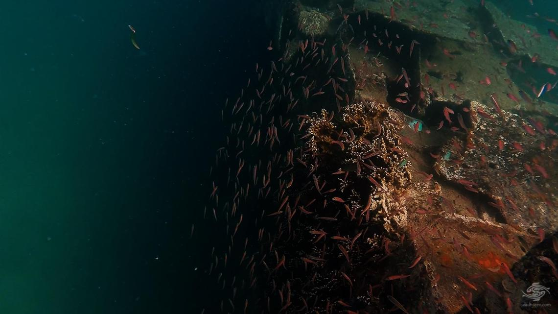 Shoals of fish on the wreck