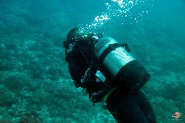 A diver on reefat Powoni near Paje in Zanzibar