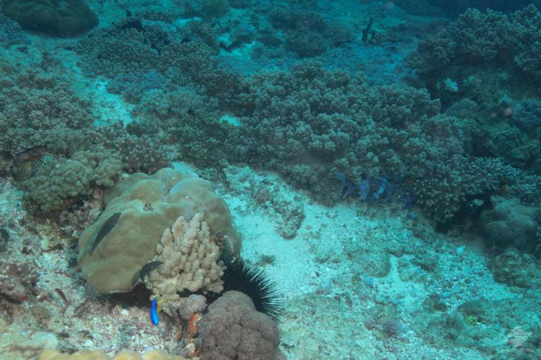Hard and Soft corals Bongoyo Patches