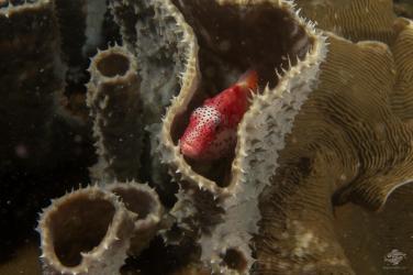 Scuba diving Bongoyo patch Tanzania