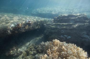 Underwater view of city