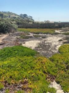 IMG 7437 Zuma Beach 225x300 - LMU Coastal Research Institute Tackles Coastal Resilience to Climate Change