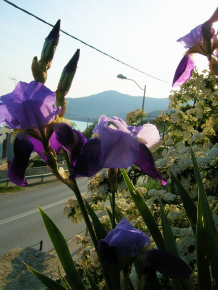 Цветущий сад, вилла Feel the Sea