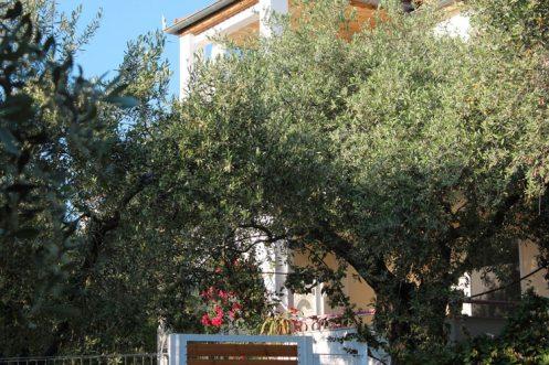 Κήπος με ελαιόδεντρα γύρω από την Βίλα Relax