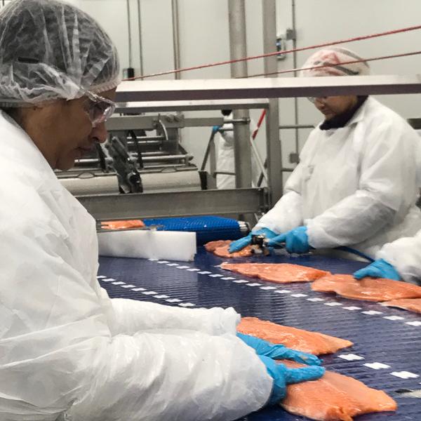 salmon processing