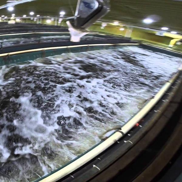 land based fish farms