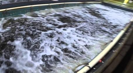 Canadian-owned land-based fish farm goes bankrupt