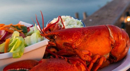 No impact on lobsters from salmon farm operations