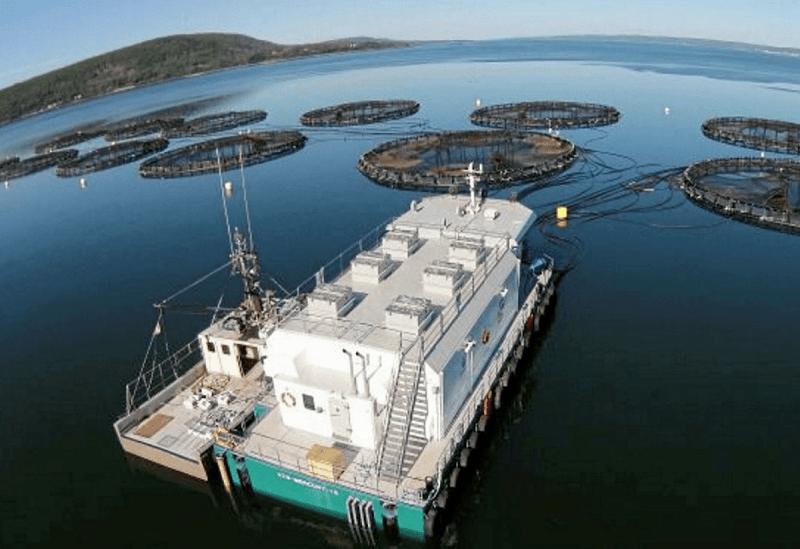 cooke aquaculture