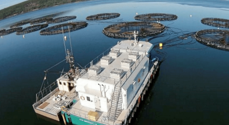 Cooke Aquaculture forges ahead in Canada, U.S.