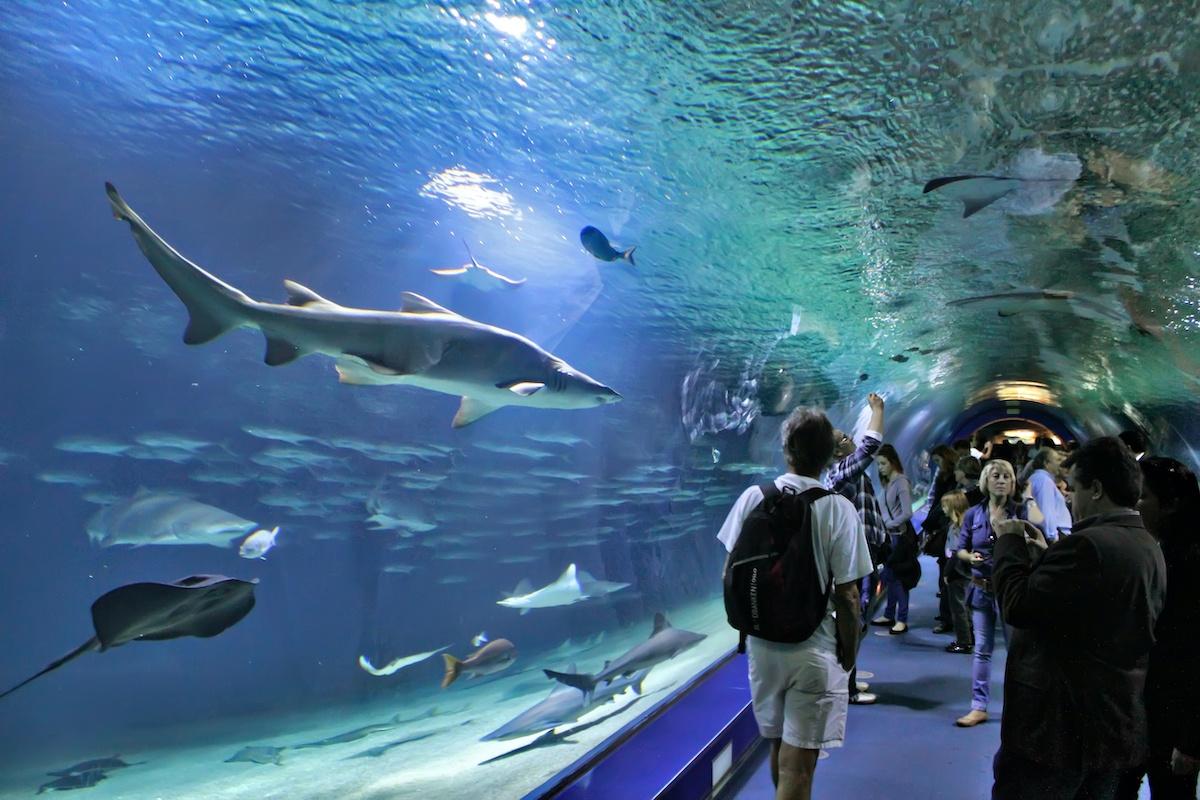 Seafood champs stir the pot to help Vancouver Aquarium - Sea West News