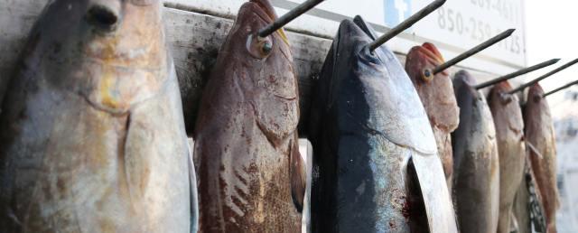 Fishing Destin FL Sea Winder