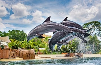 Visit howstuffworks to learn exactly how to dolphin dive. Dolphin Cove And Interactive Dolphin Pool Seaworld Orlando