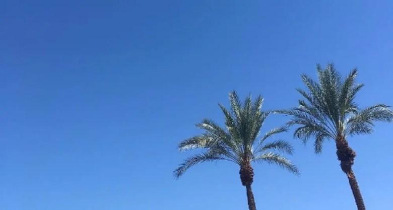 palmiersok