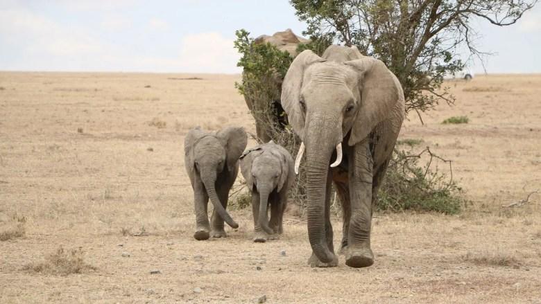 safari-3035333_1280