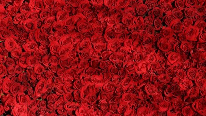 - rose-374318_1280