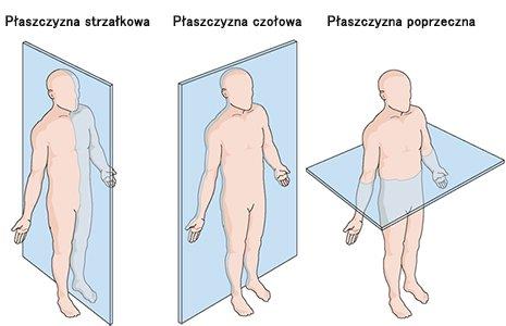 Płaszczyzny anatomiczne ciała człowieka