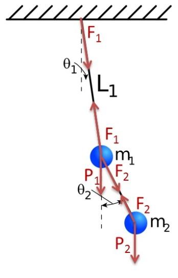 Esquema de las fuerzas presentes en el péndulo doble