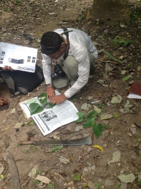 Brandon Dale, Undergraduate student at Brown University studying Ethnopharmacognosy and collecting medicinal plants in Liati Wote, Interior Volta Region, Eastern Ghana.